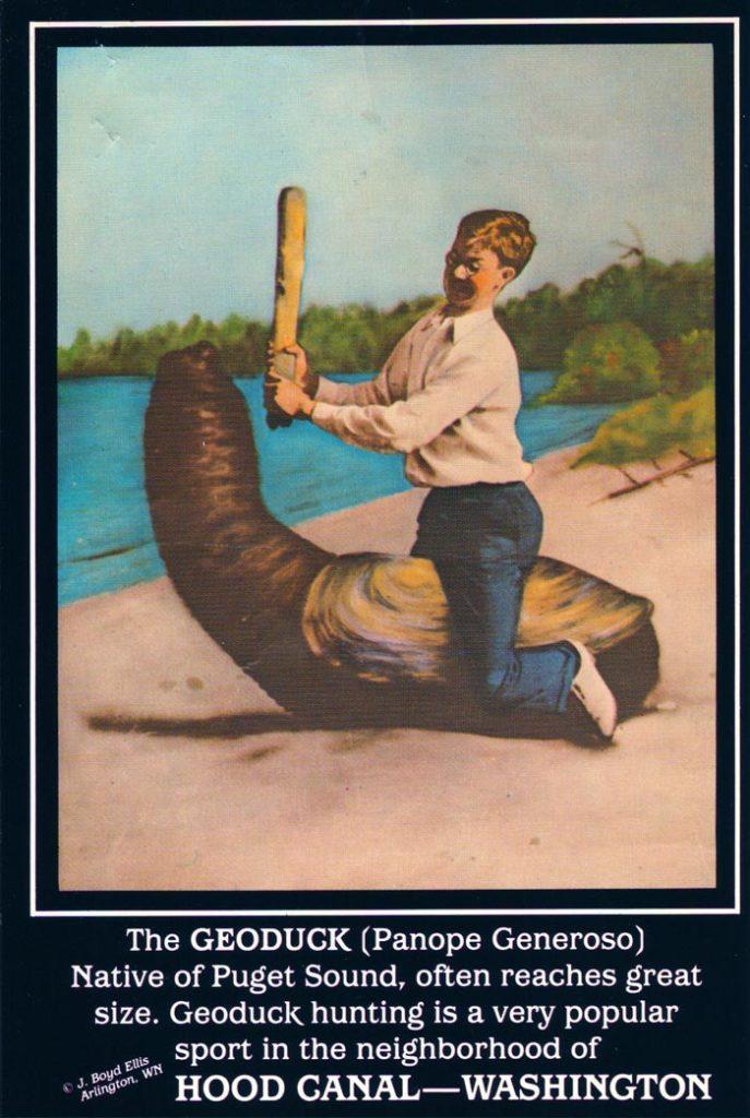 Geoduck postcard